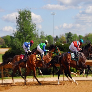 All about thoroughbred racing